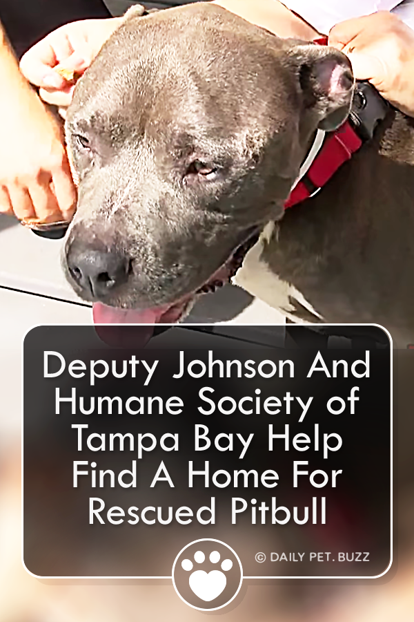 Pin on Dog Rescue