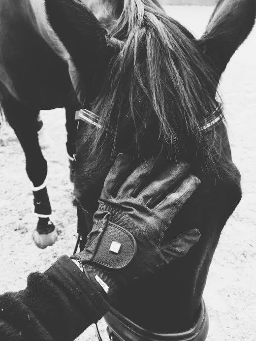 Black And White Horse Photography White Horse Photography Horse Photography Horses