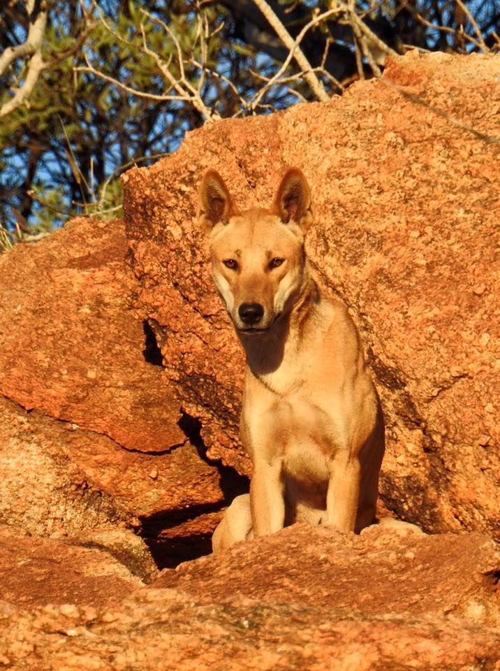 Single Post Australian native animals, Australian