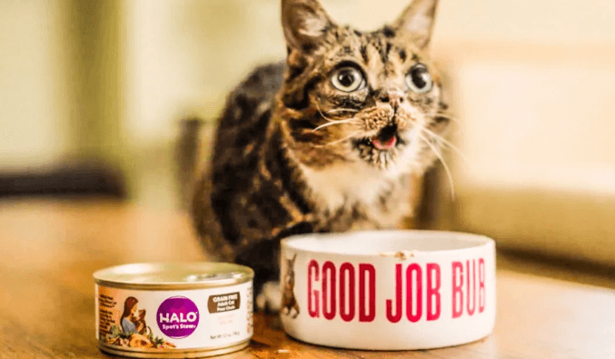 FREE Can of Halo Cat Food FreebieFriday Coupons