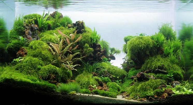 60X45X40 cm ( 108 L ) plants : Nana Petite, Cryptocoryne ...