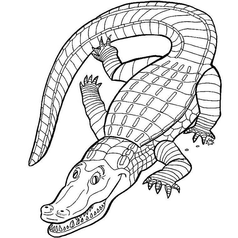Coloriage Crocodile | Paint | Pinterest