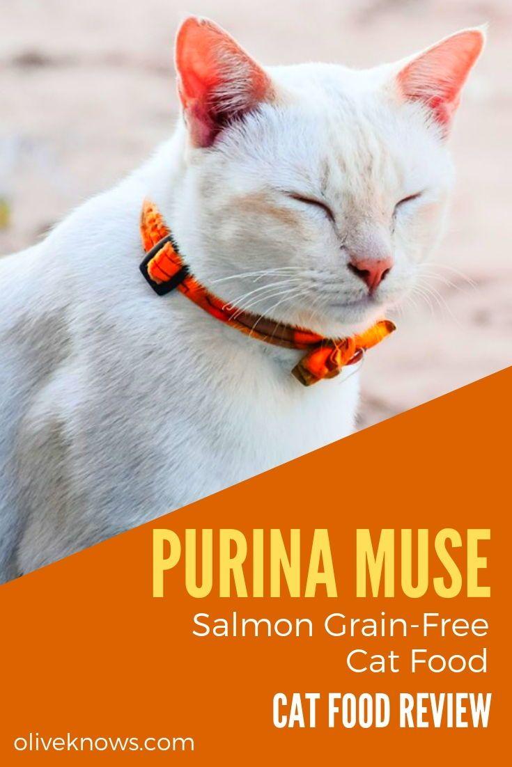 Purina Muse Salmon GrainFree Cat Food Review Cat food