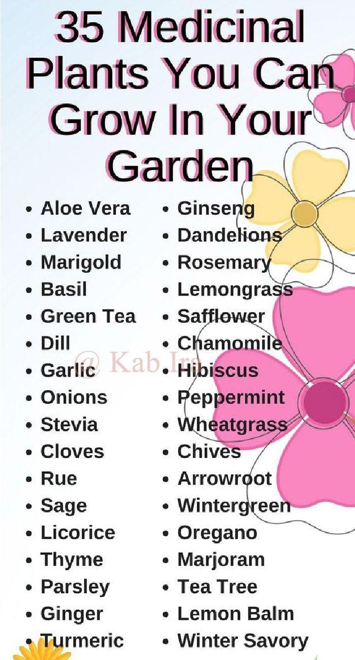 Medicinal plant you can grow in you garden. #plantlife