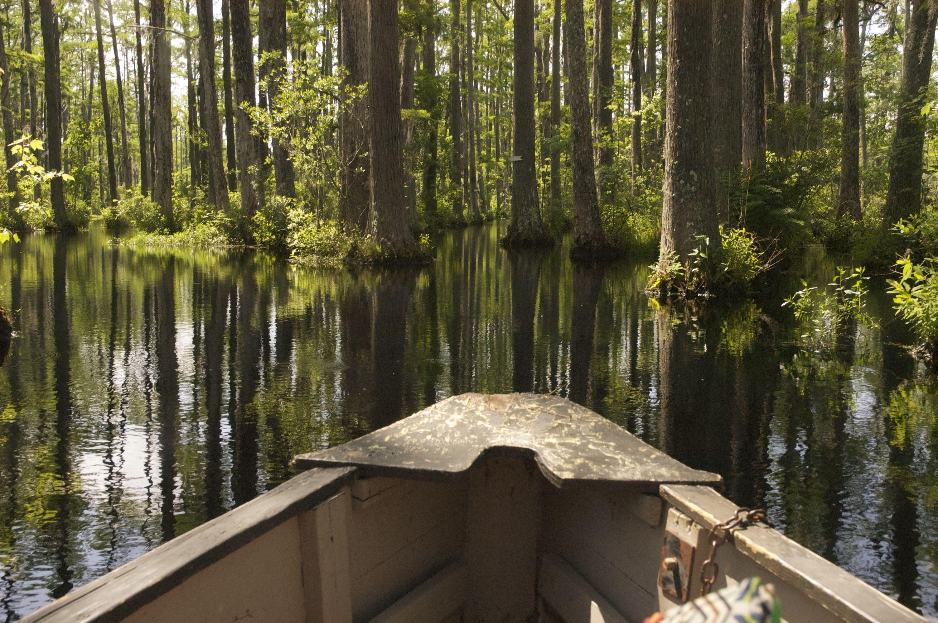 Through the pristine black waters of Cypress Gardens   Charleston ...