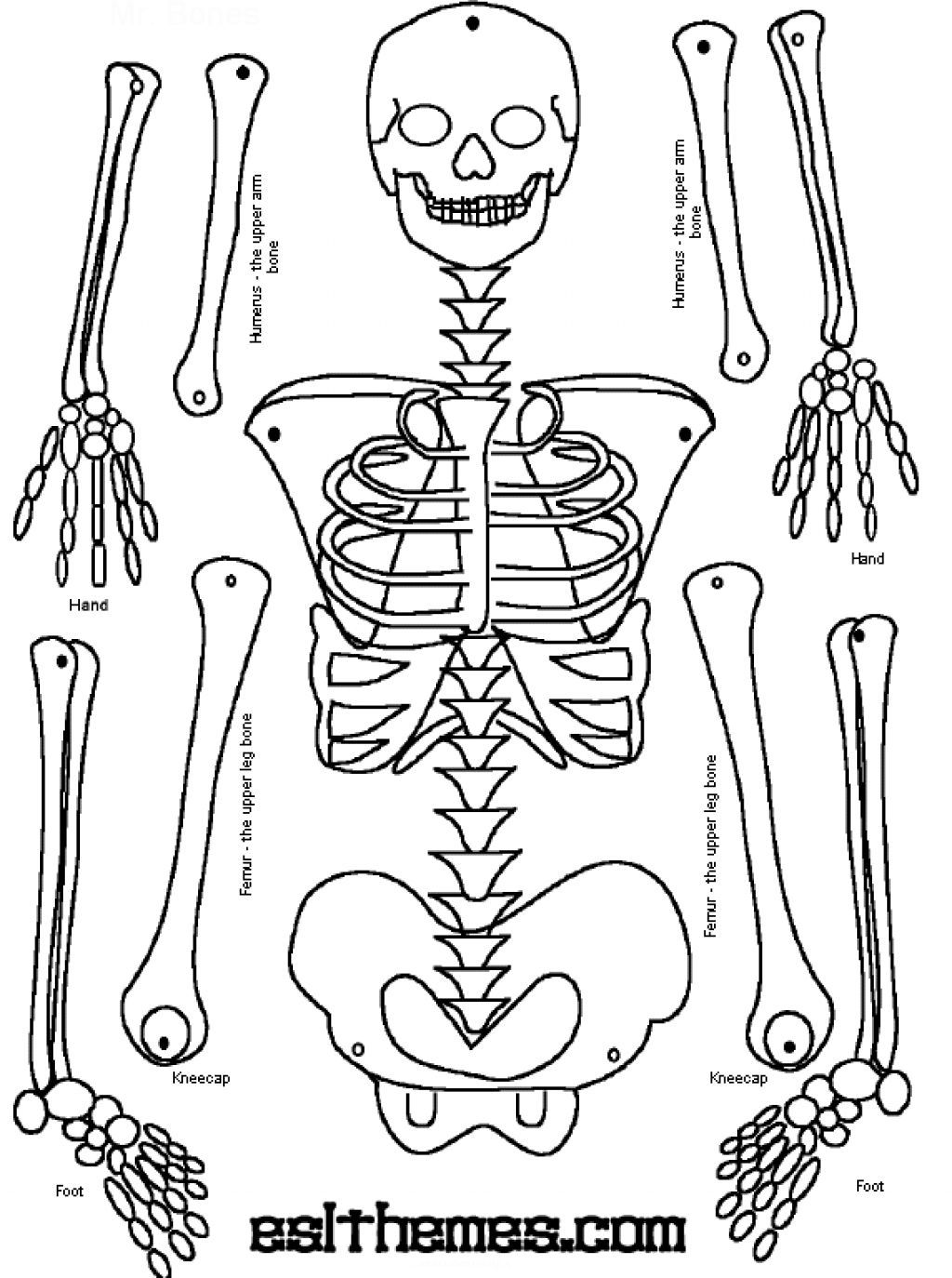 Skeleton puzzle printable print it pinterest for Skeleton template to cut out