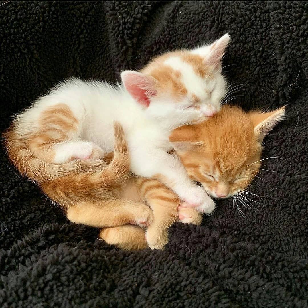 Cute Cats Cute Cats And Kittens Cute Cats Breeds Cute Cat Videos Cute Cats With Big Eyes Fluffy Cat In 2020 Cute Cat Gif Kittens Cutest Cute Cats