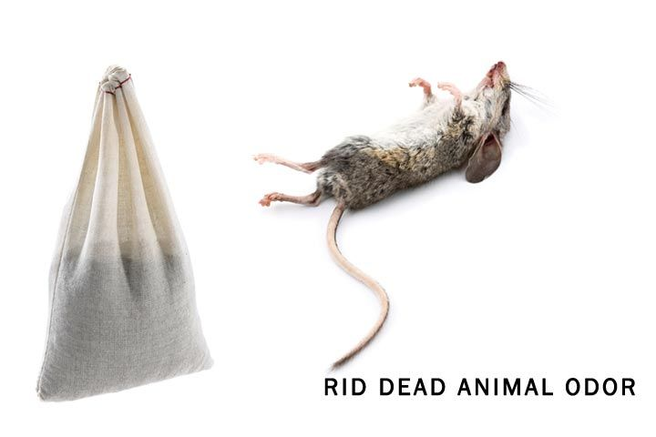 Park Art|My WordPress Blog_Dead Animal Control Near Me