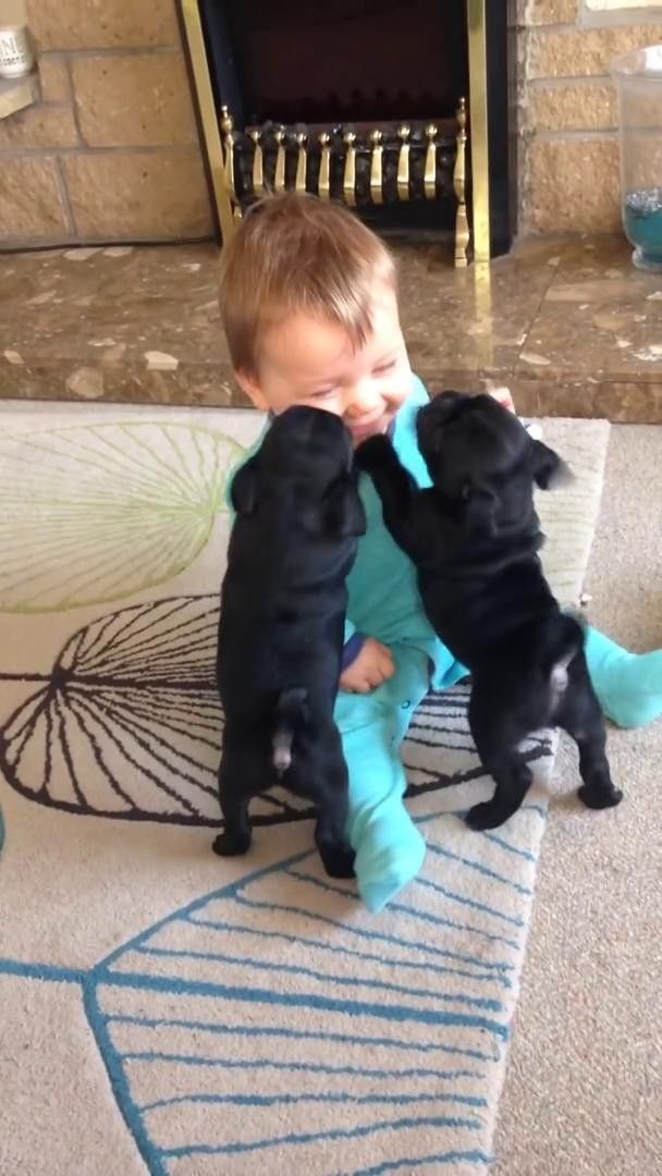 Pin By Irina Grents On Pets In 2020 Pug Puppies