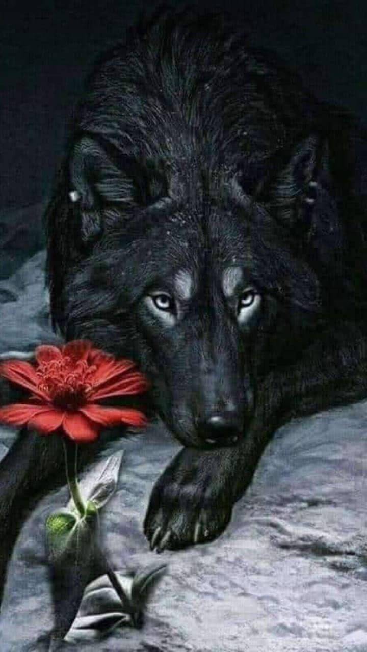 книгу анимационные фото волка с цветком установлено несколько