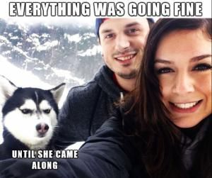 25 Dog Memes That Will Always Make Us Laugh: Jealous Husky