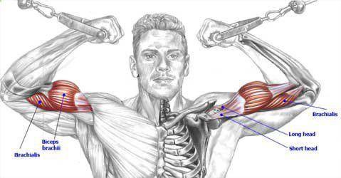 anatomy of workout 7 visit us wwwcreateasocial