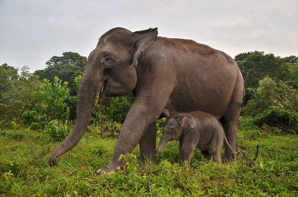 позже просто животные индонезии фото правом верхнем углу