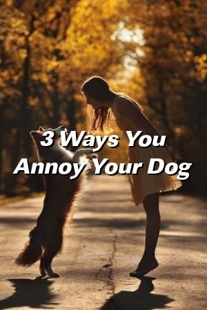 Kimberly Hudson Tells About 3 Ways You Annoy Your Dog  #моясобака  #dogs #smalldogbreeds  #poddles #Maltesedog  #pets  #puppynames #dogtreats