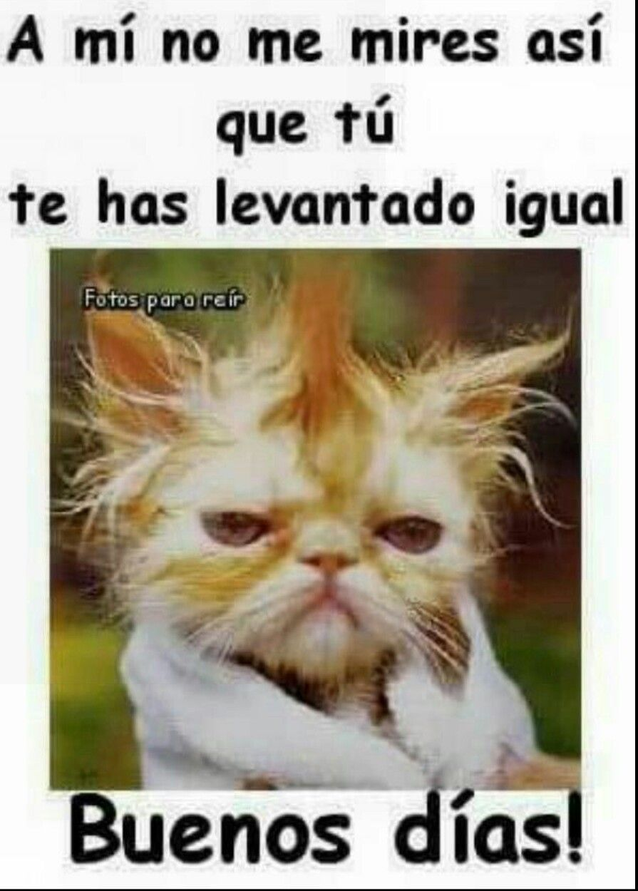 Pin By 12055157858 On Saluditos Good Morning Funny Humor Good Morning