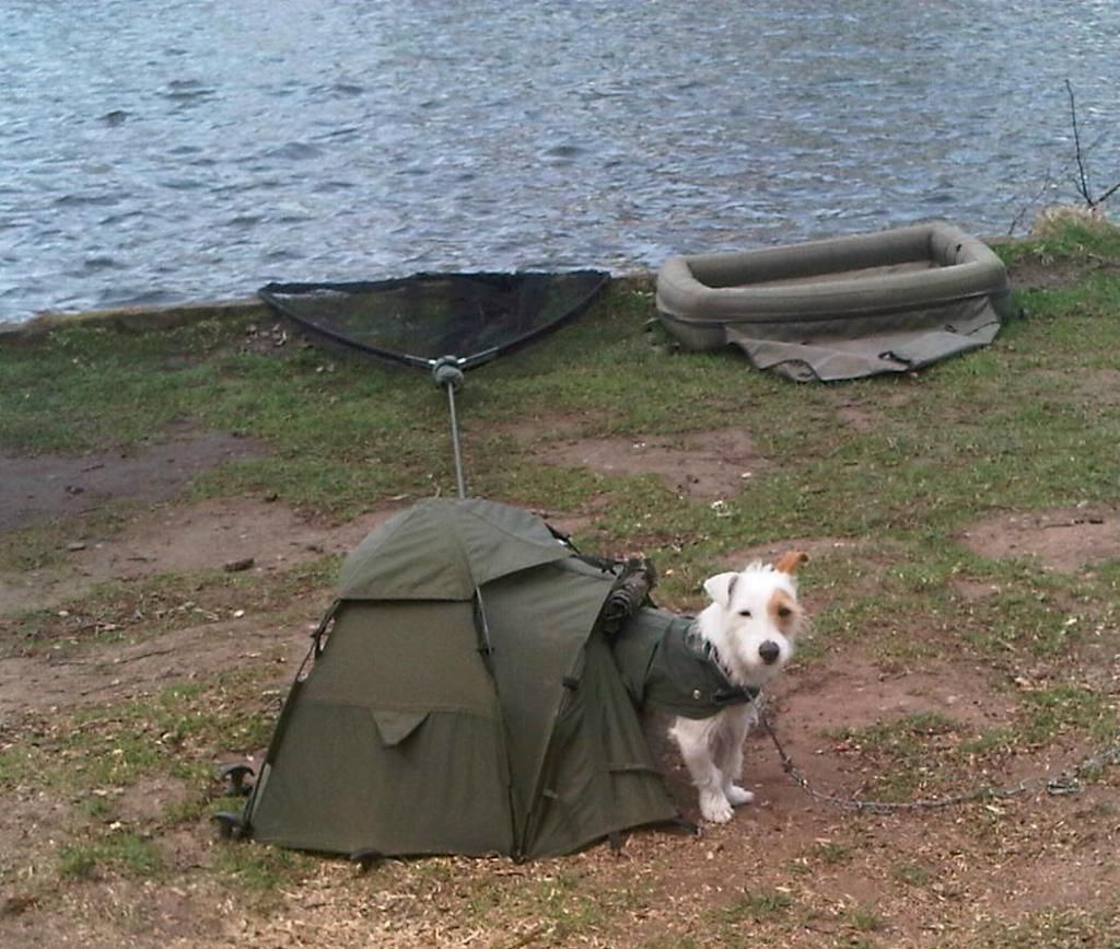 Bivvy hound... Got sent this earlier I think Nash or Fishtec should & Bivvy hound... Got sent this earlier I think Nash or Fishtec ...
