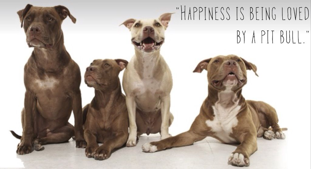 Happiness Is Being Loved By A Pitbull Quotes Pitbulls With