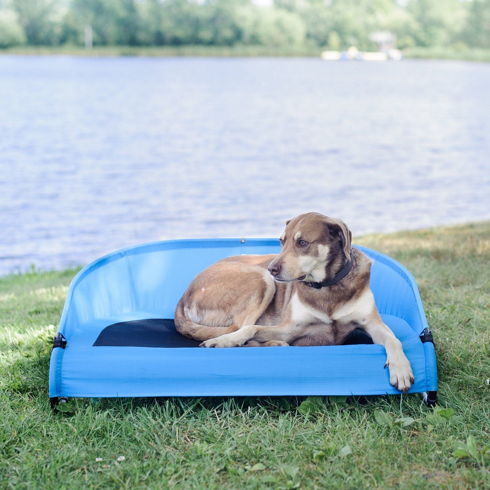 Cool Air Cot Raised Pet Bed From Gen7pets Outdoor Dog Bed