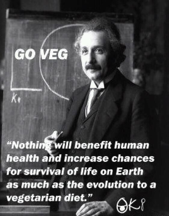 Einstein Vegetarian Diet Health Evolution
