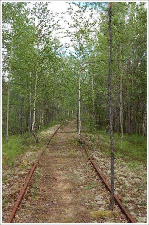 Abandoned Railroad With a Train (45 pics)