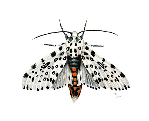 White Moth Watercolor Print Modern Moth Decor Moth Painting Leopard Moth Portrait White Tiger Moth Decor Giant Leopard Wall Art Natur Illustration Malen Wandkunst