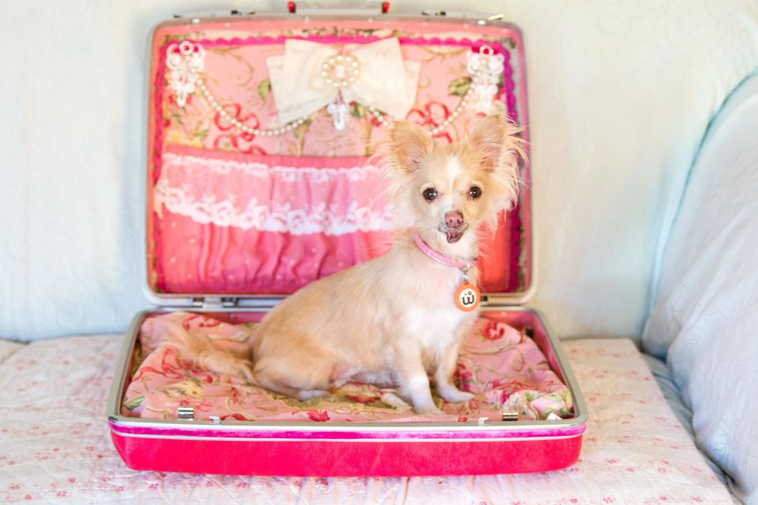 How much it costs per year to raise a chihuahua Dogs