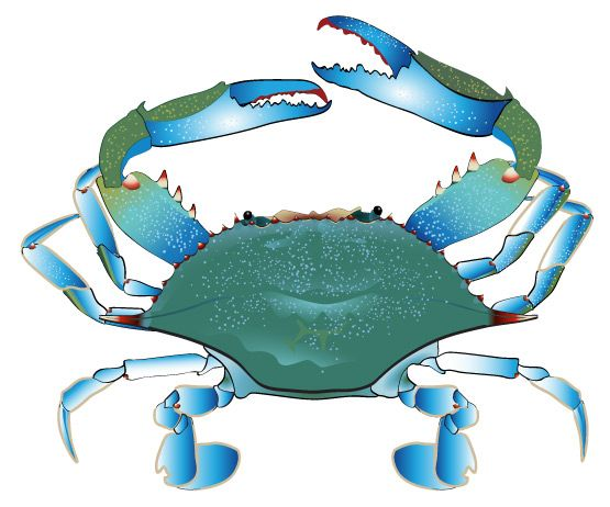 blue crab free clipart scamp ideas pinterest dolls patterns rh pinterest com blue claw crab clipart blue crab clipart black and white
