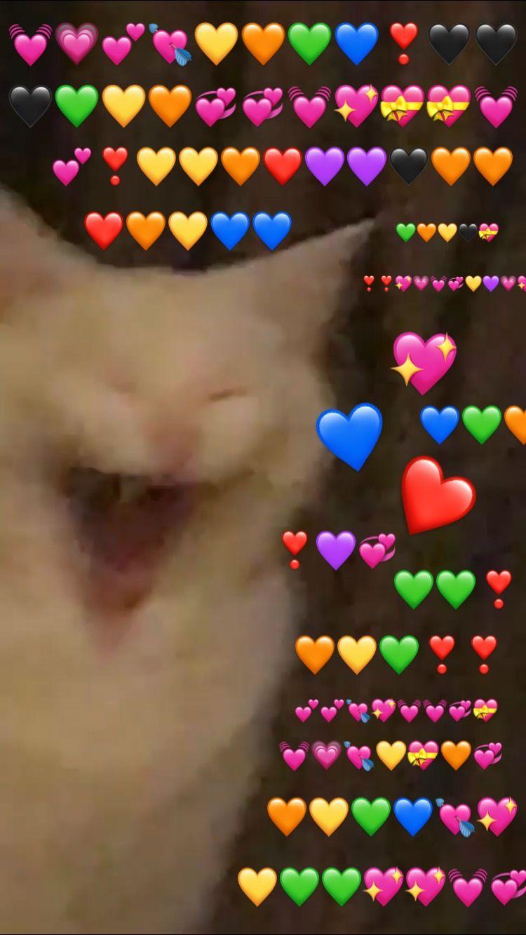 Reaction Mood Love Meme Cat Cute Memes Cute Cat Memes