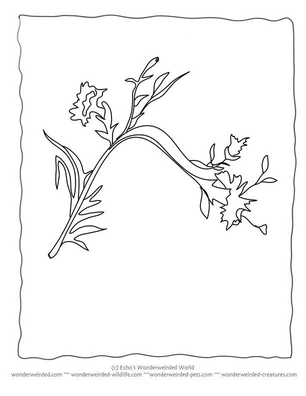 Flower Coloring Sheets Carnation Coloring Page @ wonderweirded ...