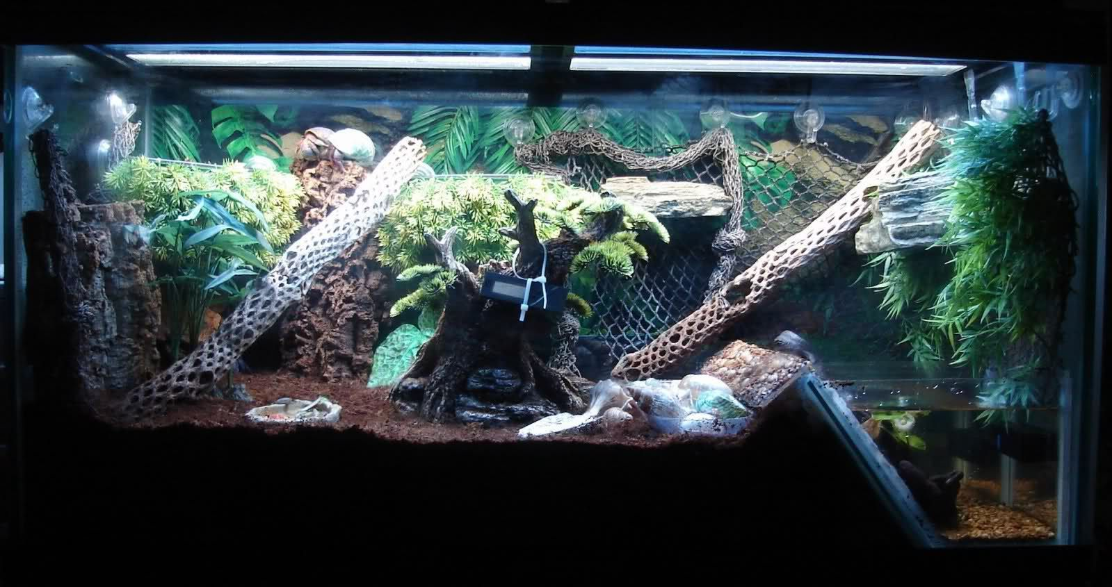 Background Ideas For Hermit Crab Tank