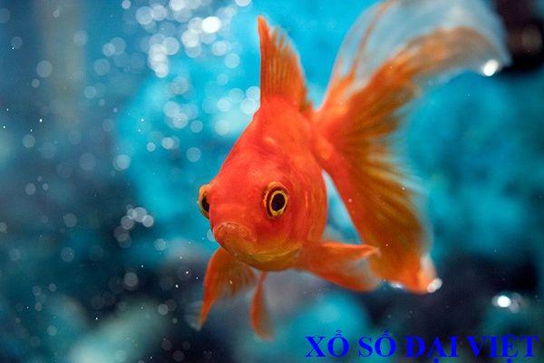 nằm mơ thấy cá vàng nhỏ