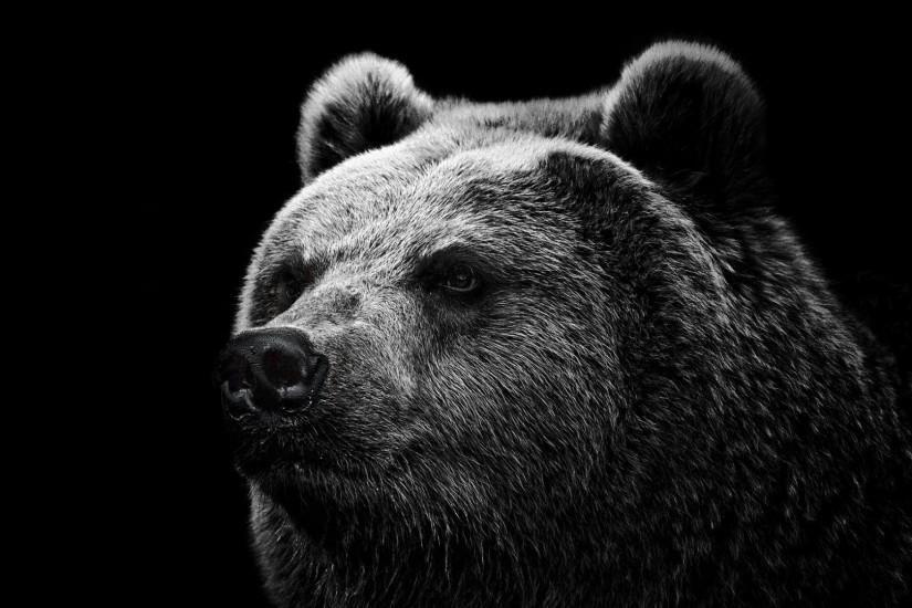 popular bear wallpaper 1920x1080 4k