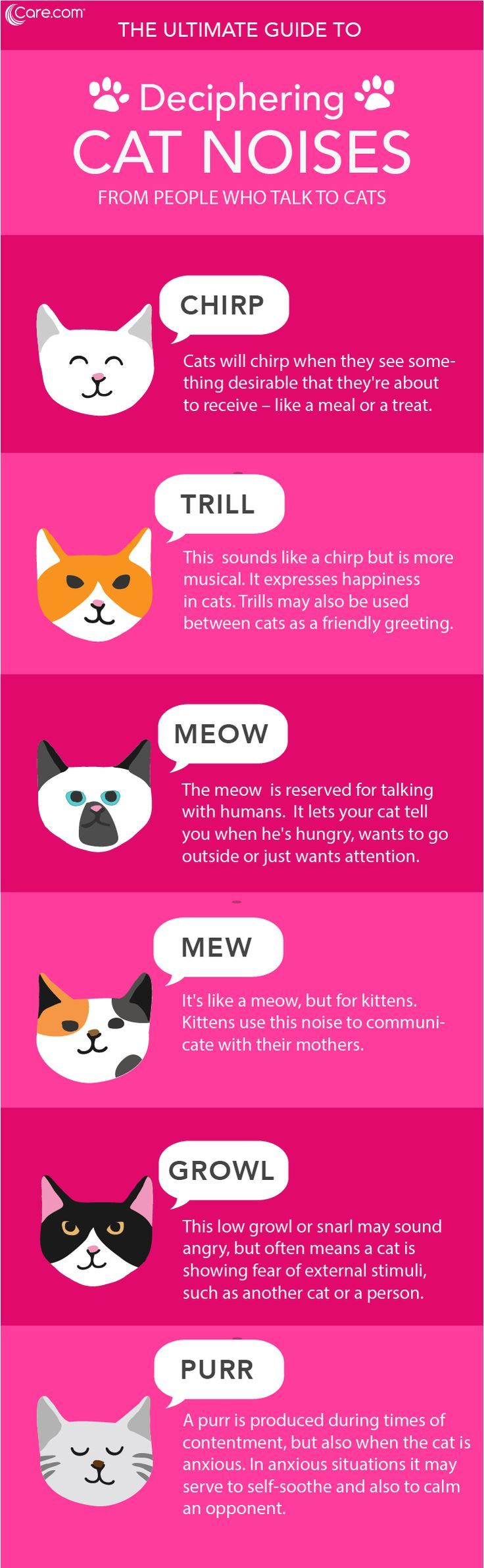 Cat Language 101 Learning Cat Noises Cat Noises Cat Language Cat Behavior