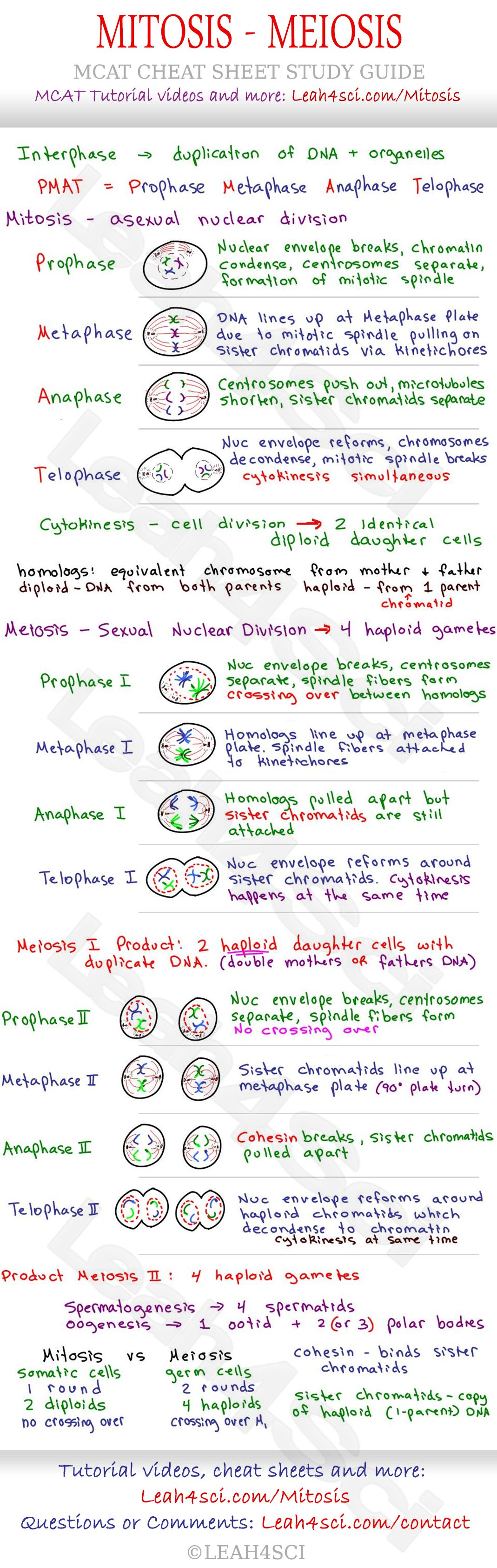 Mitosis And Meiosis Mcat Cheat Sheet Study Guide Learn What Happens In Each Step Prophase Metaphase Anaphase Teaching Biology Biology Notes School Notes [ 3369 x 1069 Pixel ]