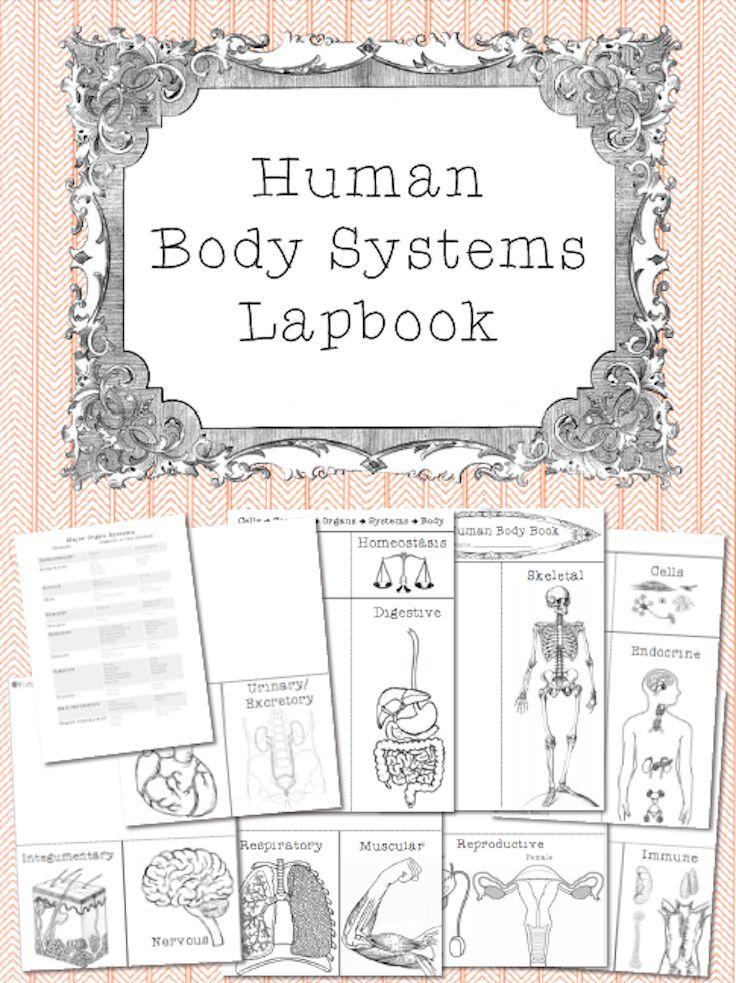 Human Body Systems Lapbook | Pinterest | Anatomía y Ciencia
