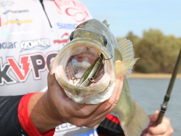Best Baits 15 Hottest Lures For Panfish Panfish Fish Crappie