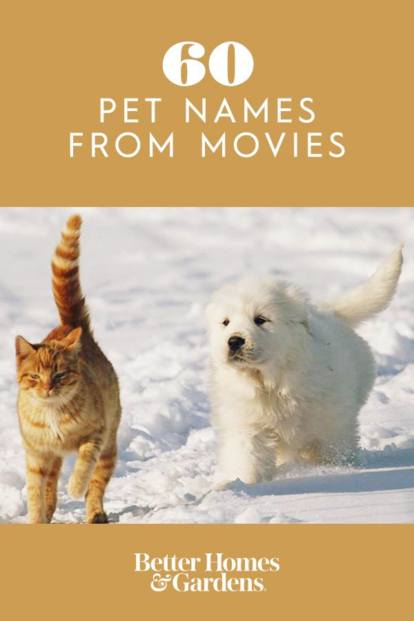 60 Pet Names from Movies Pet names, Cute pet names, Pet