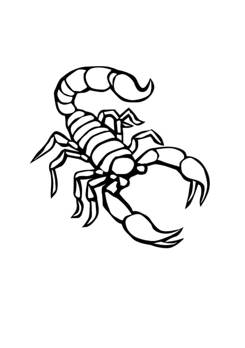 Scorpion Pictures To Color Scorpion Tattoo Coloring Pages Small Tattoos