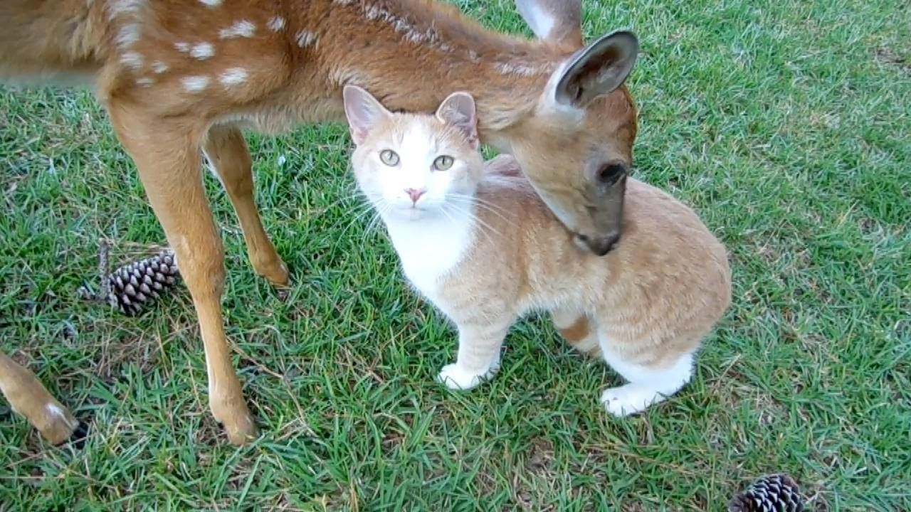 Baby Deer Cat Adopt Each Other By The Lighthouse Lady Animals Beautiful Baby Deer Cat Love