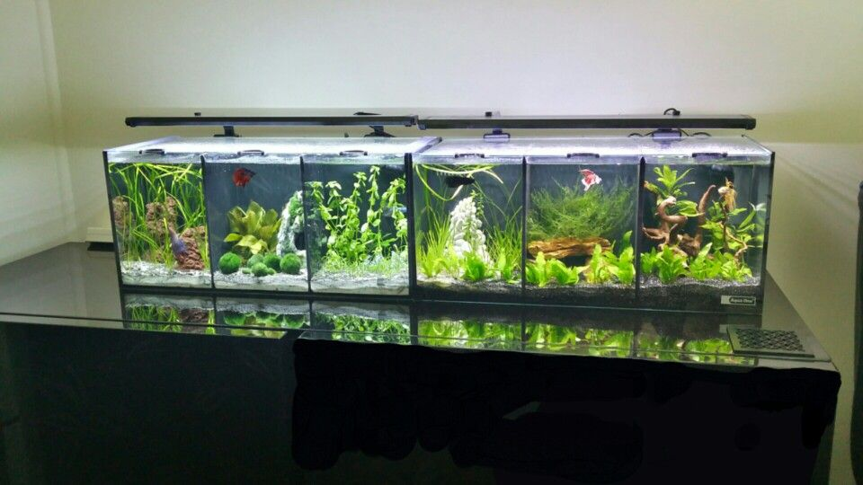 Aquaone trio tank x2 6 divided fighter tank filtered for Divided fish tank