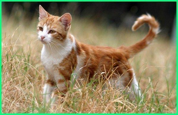 Nama Kucing Jantan Yang Bagus Lucu Dan Keren Ekor9 Com Warrior Cats Kucing Warrior Cat