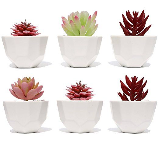 Succulent Planter Pot Set Of 6 Small White Modern Decorative Ceramic Flower Plant Pot With Drainage Ho Mini Cactus Pots Succulent Planter Ceramic Flowers
