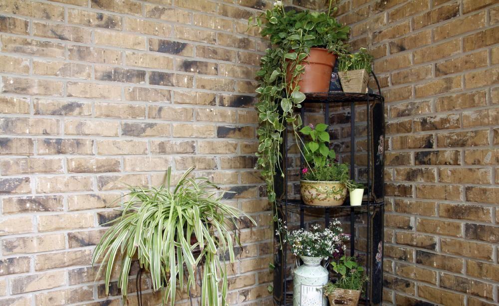 11 zimmerpflanzen f r dunkle ecken plants pinterest zimmerpflanzen dunkel und. Black Bedroom Furniture Sets. Home Design Ideas