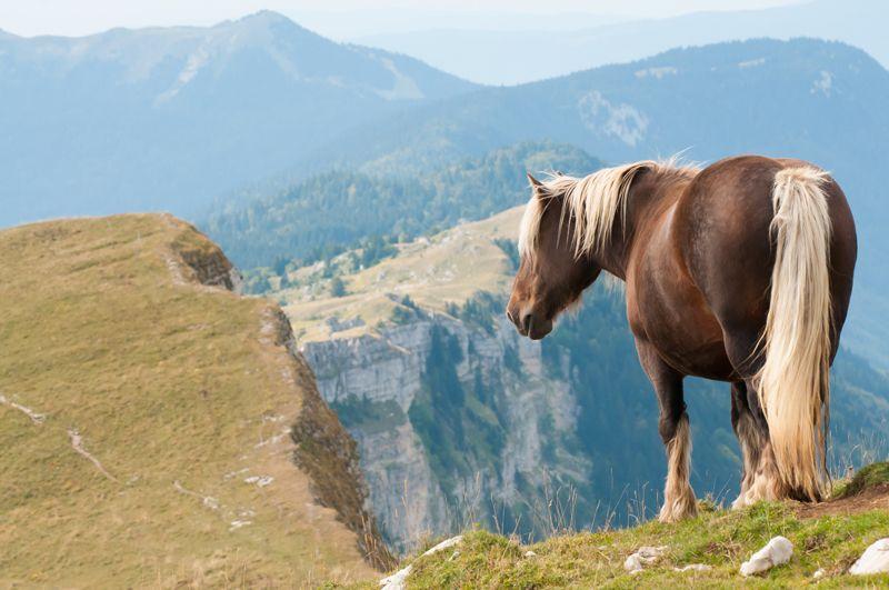 Vous l aurez bien sûr reconnu, l incontournable cheval Comtois, ici ... 525a12bc95c