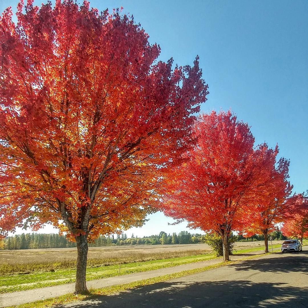 Fall color at MintoBrown Island City Park in Salem