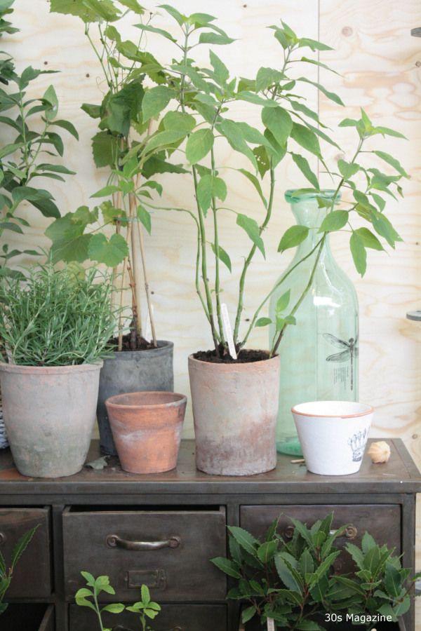 krukker grønne planter