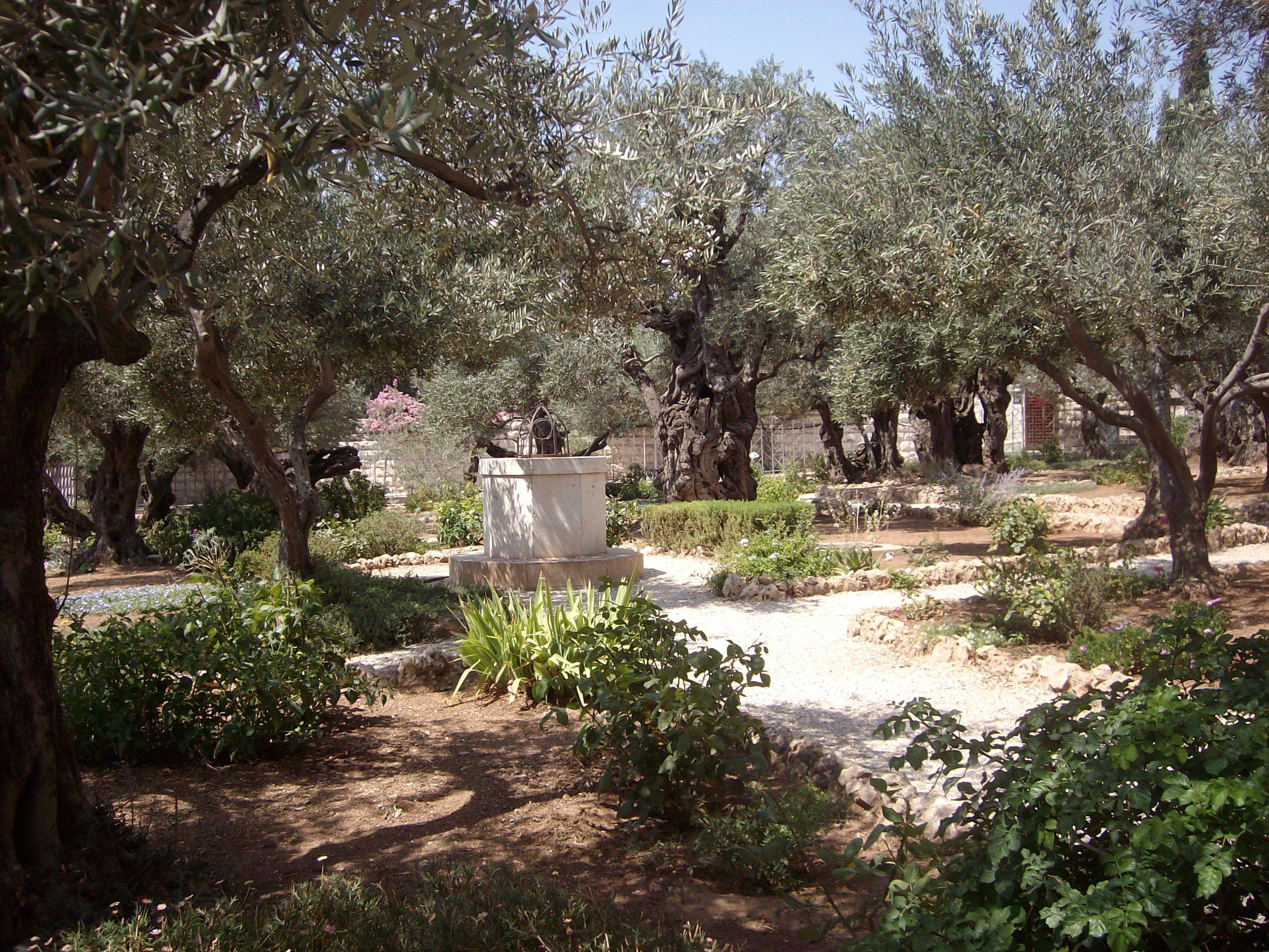Garden of Gethsemane - Israel | Places I love | Pinterest | Israel ...