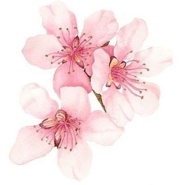 Blumen Aquarell Bild Von Anja Pilgrim Auf Flowertattoo Blumen