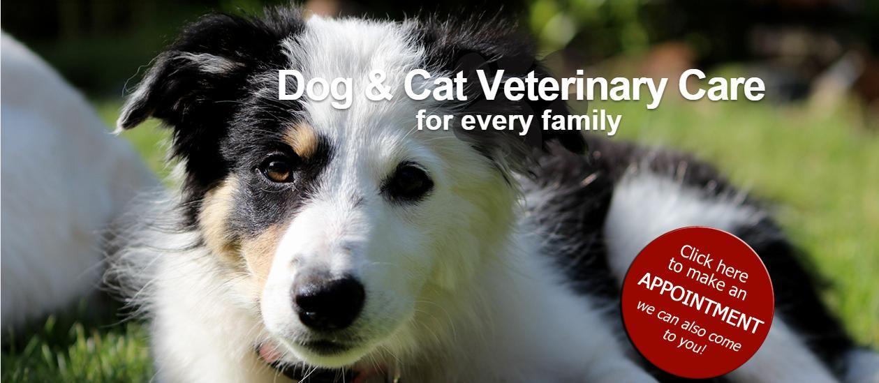 Tsolum Mobile Veterinary Clinic Good Friends Good Value All Animals Idee