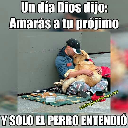 Pin De Serlianie Em Amor A Los Animales Memes Cristaos Engracados Frases Bacanas Caes Fofos